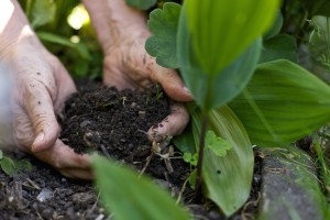 Closeup image of female hands picking up soil from the ground